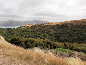 Mt Herbert Gully B