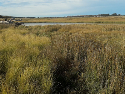 Thriving plants in the littoral-terrestrial planting area around the main body of the wetland.