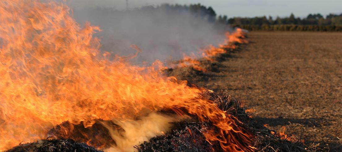 crop residue burning