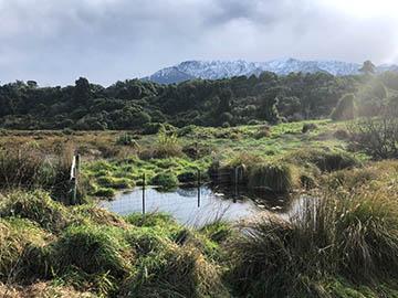Hapuku Scarp wetland in front of Kaikōura Ranges